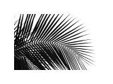 Palms, no. 10 Reproduction procédé giclée par Jamie Kingham