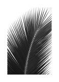 Palms, no. 14 Giclée-Druck von Jamie Kingham