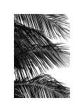 Palms, no. 4 Giclée-Druck von Jamie Kingham