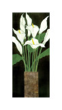 Ivory Calla Lilies Giclee Print by R. Rafferty