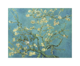 Almond Branches in Bloom, San Remy, c.1890 Giclee Print by Vincent van Gogh