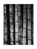 Bambus Fotografie-Druck von John Gusky