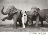 Dovima med elefanter, ca. 1955 Posters av Richard Avedon