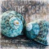 Blue Ocean Shells Prints by Andrea Haase