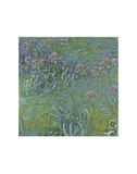 Jewelry Lilies Plakater af Claude Monet
