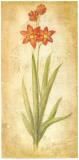 Ixia Grandiflora Print by Roberta Ricchini