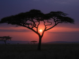 Sunset with Acacia Tree Photographic Print by Kevin O'Brien