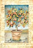 Fruti Mediterranei III Poster af Gina De Francesco