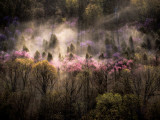 Misty View of a Forested Hillside with Trees in Bloom Photographic Print by Sam Abell