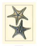 Antique Blue Starfish II Giclee Print