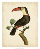 Nodder Tropical Bird III Giclee Print by Frederick P. Nodder