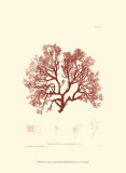 Nature Print in Coral II Poster
