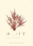 Nature Print in Coral III Poster