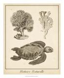 Sea Turtle Study I Giclée-tryk