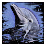 Dolphin Poster