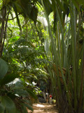 Tourists in a Palm Tree Forest at the Vallee De Mai Nature Reserve Fotografisk tryk af Alison Wright