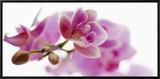 Orchid in Bloom Impressão em tela emoldurada