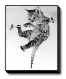 Kitten on a Clothes Line Stretched Canvas Print by Erik Parbst