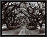 Path in the Oaks II, Louisiana Impressão em tela emoldurada por Monte Nagler