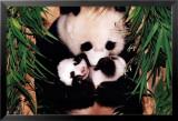 Pandamutter und Baby Kunstdruck