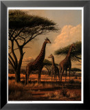 Giraffe Family Poster by Clive Kay