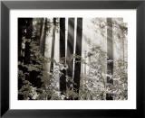Misty Forest Poster von Dennis Frates