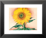 A Sunflower from Maggie, 1937 Art by Georgia O'Keeffe