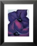 Purple Petunias, 1925 Láminas por Georgia O'Keeffe