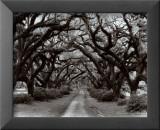 Path in the Oaks II, Louisiana Prints by Monte Nagler