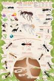 Hormigas Fotografía