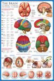 脳 アートポスター