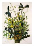 Mocking Birds and Rattlesnake, from 'Birds of America', Engraved by Robert Havell Giclée-tryk af John James Audubon