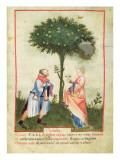 Nouv Acq Lat 1673 Fol.18 Harvesting Lemons, from 'Tacuinum Sanitatis', C.1390-1400 Giclée-tryk af  Italian School