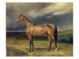 Abdul Medschid' the Chestnut Arab Horse, 1855 Giclée-tryk af Carl Constantin Steffeck