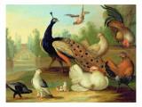 A Peacock, Doves, Chickens and a Jay in a Park Lámina giclée por Marmaduke Cradock