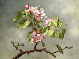 Apple Blossoms and a Hummingbird, 1875 Giclée-tryk af Martin Johnson Heade