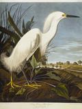 Snowy Heron or White Egret / Snowy Egret Reproduction procédé giclée par John James Audubon