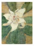 Magnolia Grandiflora Gicléetryck av Christian Rohlfs