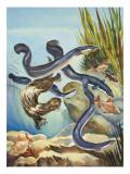 The Eel's Amazing Journey Giclée-tryk af G. W Backhouse