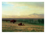 Buffalo on the Plains, C.1890 Giclée-tryk af Albert Bierstadt