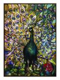 Peacock Giclée-tryk af  American School