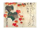 Valmuer Giclée-tryk af  Japanese School