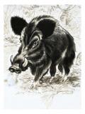 Wildschweine Giclée-Druck von  English School