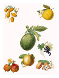 Tropical Fruit Giclée-vedos tekijänä  English School