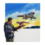 Falcon Flight Giclee Print by Wilf Hardy