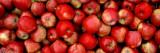 Close-up of Red Apples Vinilo decorativo