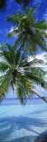 Maldiverna Väggdekal