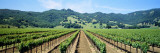 Napa Valley Vineyards Hopland, CA Wallstickers af Panoramic Images,