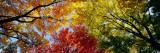 Kleurrijke bomen in de herfst van onderaf gefotografeerd Muursticker