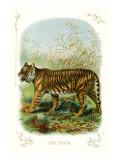 The Tiger Decalcomania da muro